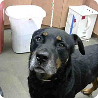 Adopt A Pet :: Colby - Tracy, CA