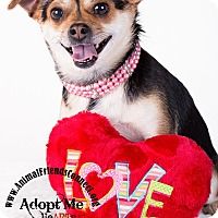 Adopt A Pet :: Lilly - Lodi, CA
