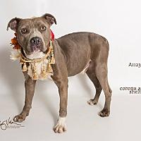 Adopt A Pet :: KENNEL 6 - Corona, CA