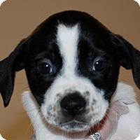 Adopt A Pet :: Virginia - Salem, WV