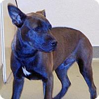 Adopt A Pet :: Rory - Wildomar, CA