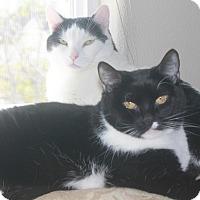 Adopt A Pet :: Yang - Boise, ID