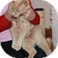 Adopt A Pet :: Moops - Vancouver, BC