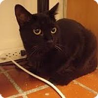 Adopt A Pet :: Cassie - Chicago, IL
