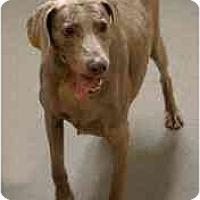 Adopt A Pet :: GRETA - Attica, NY