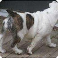 Adopt A Pet :: Epiphany - Antioch, IL