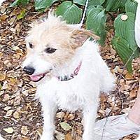 Adopt A Pet :: Greta - Conway, AR