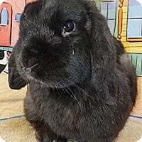 Adopt A Pet :: Little Man Tate - Foster, RI