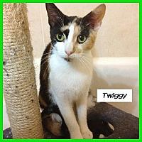 Adopt A Pet :: Twiggy - Miami, FL