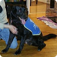Adopt A Pet :: Lady - Toledo, OH
