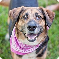 Adopt A Pet :: Sushi - Kingwood, TX