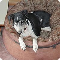 Adopt A Pet :: Teri- sponsor only - Creston, CA