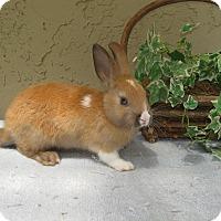 Adopt A Pet :: Topaz - Bonita, CA