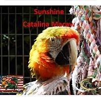 Adopt A Pet :: SunshineSpecialNeeds Catalina - Vancouver, WA