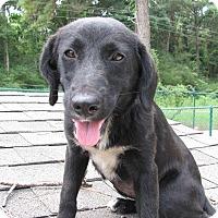 Adopt A Pet :: Emma - Groton, MA