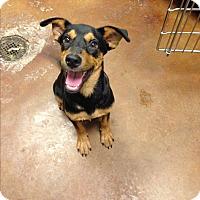 Adopt A Pet :: Memrie - Groton, MA