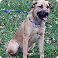 Adopt A Pet :: Lila (55 lb) Video! - West Sand Lake, NY