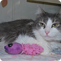 Adopt A Pet :: Mimi - New Castle, PA