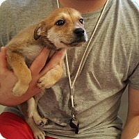 Adopt A Pet :: Mia - Baltimore, MD