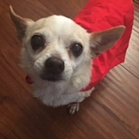 Adopt A Pet :: Nacho - Los Angeles, CA