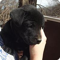Adopt A Pet :: Nandy - Lincoln, NE