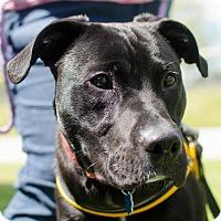 Adopt A Pet :: Buddha - Greenwood, SC