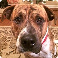 Adopt A Pet :: Buster - Acworth, GA