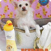 Adopt A Pet :: Kimba - Arcadia, FL
