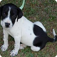 Adopt A Pet :: Padraic - Winder, GA
