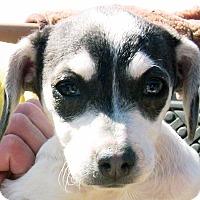 Adopt A Pet :: Valentina - Poway, CA