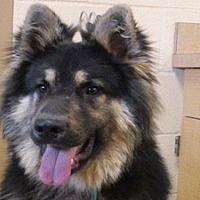 Adopt A Pet :: Grizz - Portland, OR