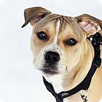 Adopt A Pet :: Gordon - Reisterstown, MD