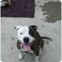 Adopt A Pet :: Petey - Lake Forest, CA