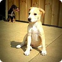 Adopt A Pet :: Bobbie - Gadsden, AL