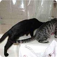 Adopt A Pet :: Tabby & Jett - Kensington, MD