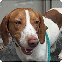Adopt A Pet :: Dylan - Blairstown, NJ