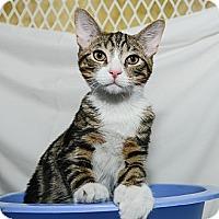 Adopt A Pet :: Amos - New York, NY