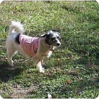 Adopt A Pet :: Cupcakes - Bluffton, SC