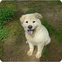 Adopt A Pet :: Hope - Eden, NC