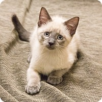 Adopt A Pet :: Lonna - Chicago, IL
