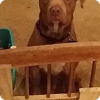 Adopt A Pet :: Lieutenant Dan - Flower Mound, TX