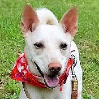 Bernese Mountain Dog Mix Dog for adoption in San Francisco, California - Manda
