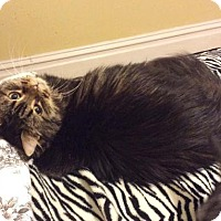 Adopt A Pet :: Katie - Harrisonburg, VA