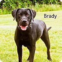 Adopt A Pet :: Brady - Cedar Rapids, IA