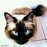 Adopt A Pet :: Bella - Davis, CA