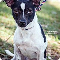 Adopt A Pet :: Burton - Gainesville, FL
