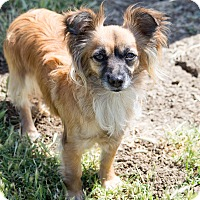 Adopt A Pet :: Willow - Patterson, CA