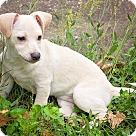 Adopt A Pet :: Cher