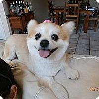 Adopt A Pet :: Sushi - Davie, FL