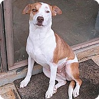 Adopt A Pet :: Eliza Peaches - Brattleboro, VT